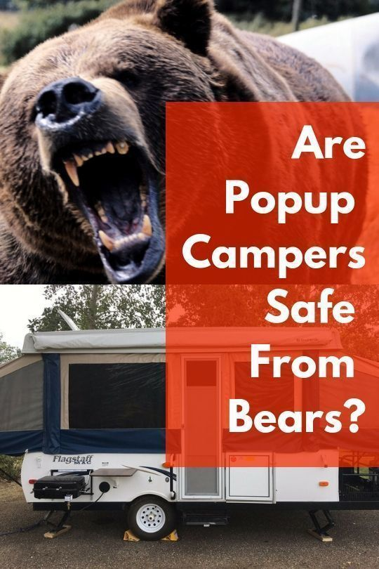 Are Pop-up Campers Safe From Bears? 3