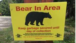 Are Pop-up Campers Safe From Bears?