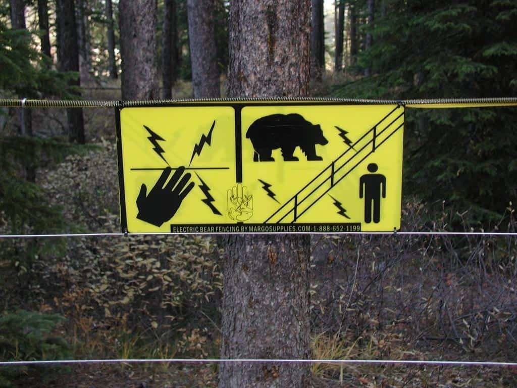 Are Pop-up Campers Safe From Bears? 4
